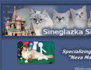 Sineglazka Siberian Cats - Siberian Cat breeder in Las Vegas, NV