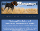 windswept wirehaired pointers